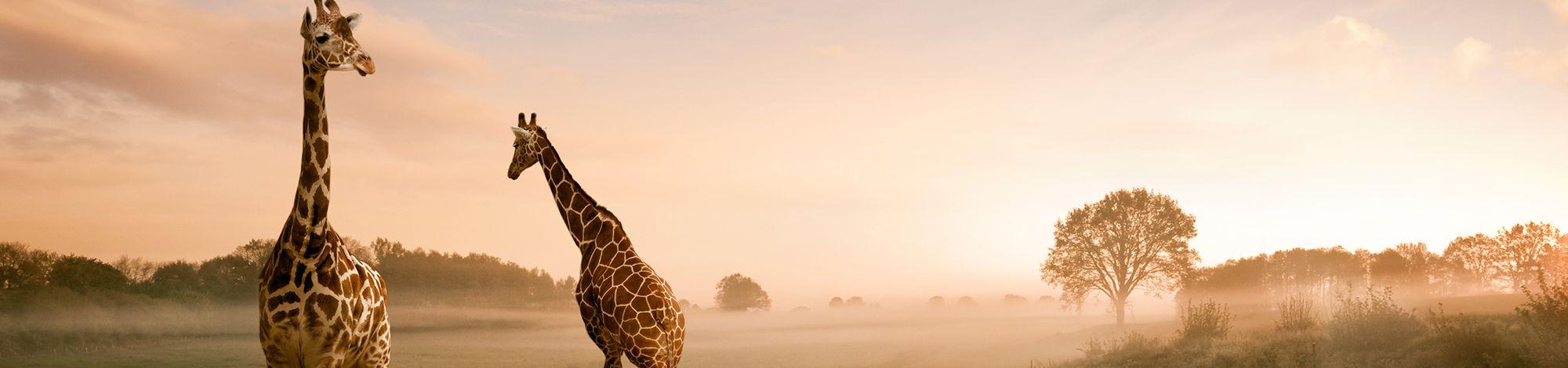 Bild von Kenia