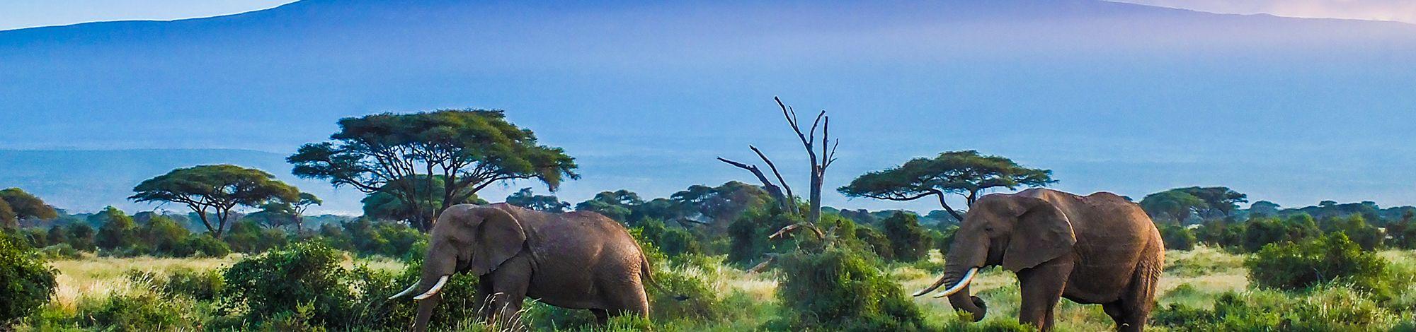 Bild von Kilimanjaro